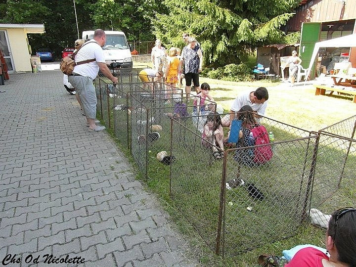 1. Kladenská výstava morčat
