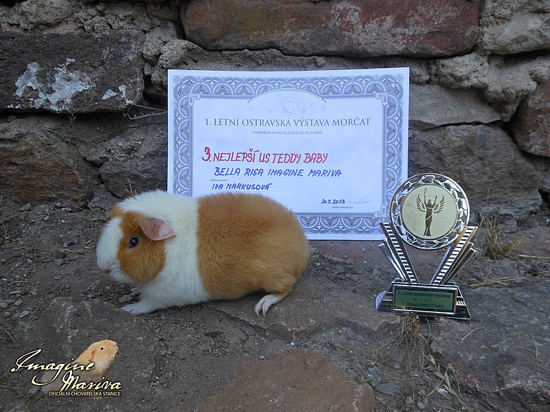 1. Letní Ostravská výstava morčat