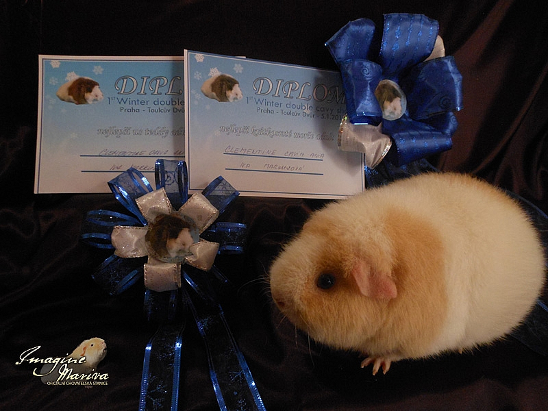 1. Winter double cavy show