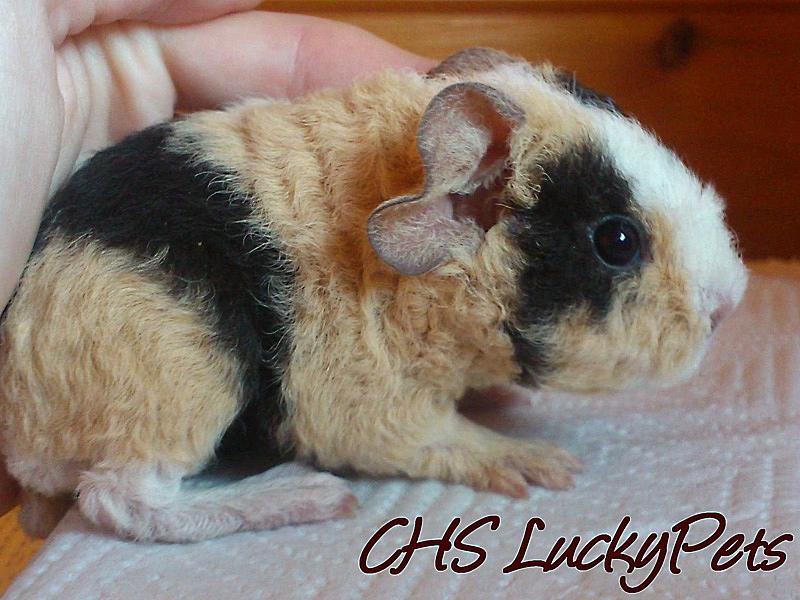Ciara LuckyPets