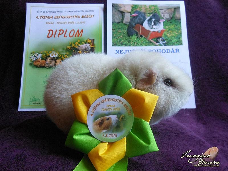4. Výstava krátkosrstých morčat