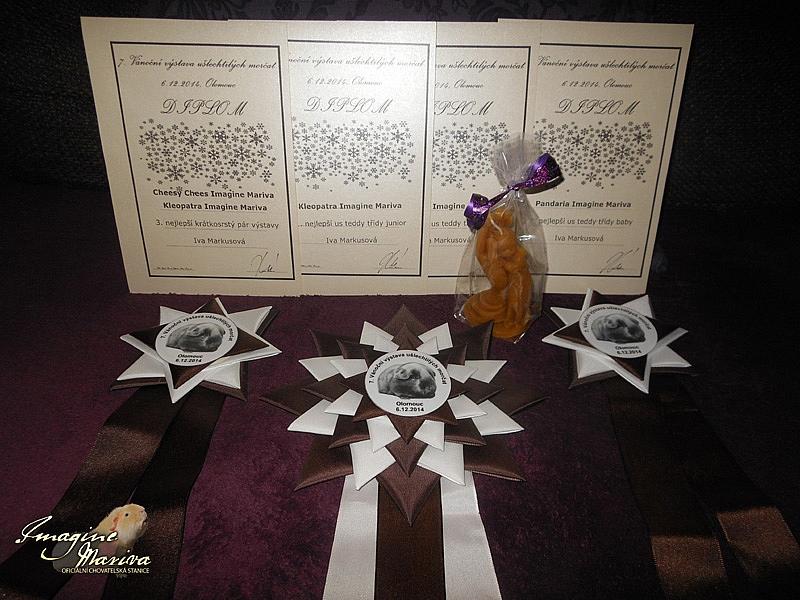 7. Vánoční výstava ušlechtilých morčat Tischschau